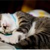 「セルフカウンセリング」が私にくれた‥猫になる時間☆