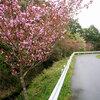 4月27日(木)ロープデー(よいつな)