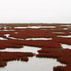 網走・能取湖のサンゴ草02 2007年9月15日撮影