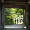 浄瑠璃寺で新緑リフレクションとにゃんこと@2021