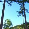 JR横須賀線 杉木立