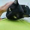 【猫ブログ】黒猫ココロに皮下点滴(約43回目)