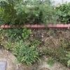 花壇完成から4か月(夏の花壇)