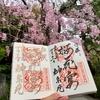 サクラ舞い散る花筏 京都・神泉苑