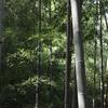 「初めて見る竹林は美しい」留学生のひとことから始まった竹林空間アートを観て。