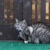 1月9日 草津温泉で猫さま歩き と観光の情景