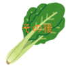 リボベジ(再生野菜)に挑戦~小松菜その後