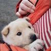 保護子犬しずくの動画