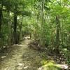 太陽と緑の道コース№3(道場南口~二郎~有野台)を歩いてみました