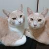 猫の里親さんから届いた写真!成長がみられて嬉しい!