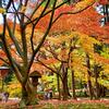 アカオウ52周年特別イベント・「9月10月11月フォトコンテスト」受賞作品決まる!