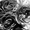 スマスマ最終回~中居君の手と黒薔薇