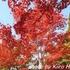 【滋賀】湖東三山・金剛輪寺。血染めの紅葉と、絶品手打ちそば・藤村