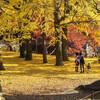【フォト】秋の岡崎公園(2014年版)、浅野祥雲写真展最終日