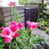 6月の花 〜わが家の花たち〜