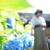 紫陽花⑧(北鎌倉・東慶寺から浄智寺へ)