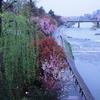 【旅行記】フォトジェニックな京都旅!初めて一眼で桜を撮ってきた2!ノッタカフェ~哲学の道(2017.04.11)