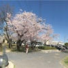 春爛漫🌸🌸各地の桜🌸🌸