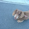 愛犬とご近所の関係を良好にしたい。家族の一員だもんね。