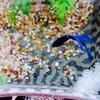 【自然の神秘2】青い宝石💎ベタの泡巣のその後…凄いことになっています