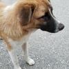 ラオス一人旅旅行記 ⑤犬に優しく