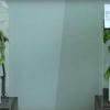植物も、ほめたら成長、けなされたらしおれる?