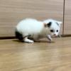 保護猫シポナイ成長記