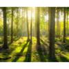木を見て森を見ず