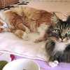 リビアン記録 4月14日 猫団子まではいかないけども・・(*^_^*)