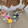 今年の猫の日は、新しいおもちゃをプレゼント。