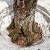 ◆'21/05/04 県立自然博物園・ブナの森散策①