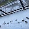 謎の雪の上の足跡