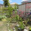目ざめた春の庭