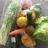 今週の有機野菜