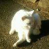 「唐澤山神社(栃木県)」 猫がお出迎え!楽しく、癒される神社!