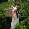スリランカ1人旅行⑥初紅茶葉摘み!