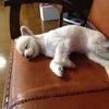 あずきソファーでお昼寝をする
