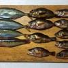 三浦半島 城ヶ島で魚釣りをしてきた