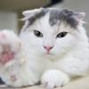 猫の性格に最も影響を与える、環境要因3点