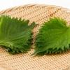 【生活】水草一番サンドを使って元手0円大葉(シソ)栽培【ベランダ栽培】