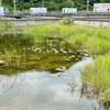 白水養殖池跡(仮称)(沖縄県石垣島)