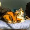 【愛猫日記】毎日アンヌさん#162