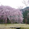 【募集締切】4月9日(日) 奥多摩・浅間嶺 春を感じる花見ハイク&陽だまりヨガ