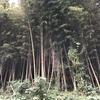 竹林整備の季節