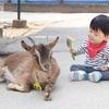 東松山☆埼玉こども動物自然公園へ~(春休み最終日🌸)