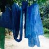 【募集】藍染めの会