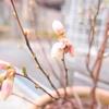 ブルーベリーの花は白い花。