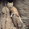 【動物が近い!】神戸どうぶつ王国【スナネコのお宝写真有】