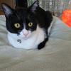 今日の黒猫モモ&白黒猫ナナの動画ー1022