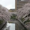 路面電車王国の富山に行ってきました~松川遊覧船からの桜見物は圧巻~富山編④